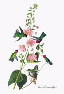 James-Audubon-Art-2