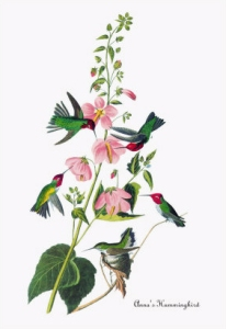 James-Audubon-Art-2