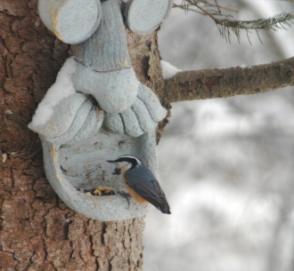Red-breastedNutHatchYAHOO