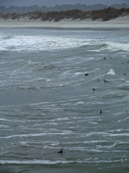 Grebess-Surf