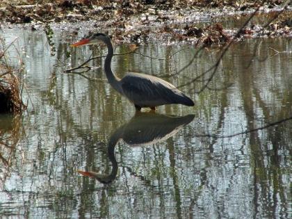 Heron-CandlerMurphy