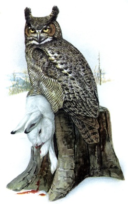 Painting by Louis Agassiz Fuertes depicting a great horned owl with one of its primary prey species, a snowshoe hare.