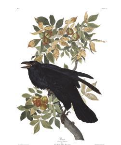 Plate-101-Raven-(610)-final