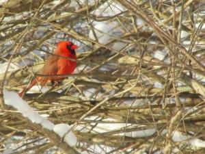 Cardinal-Enclosed
