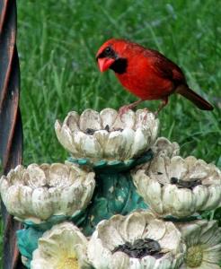 Cardinal-MorePlease
