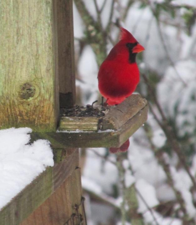 Cardinal-Two 2
