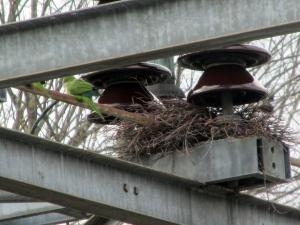 Monk-Nest