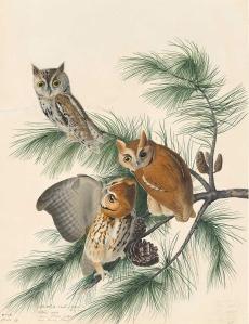 Audubon-Owls