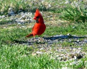 cardinal_driveway-copy