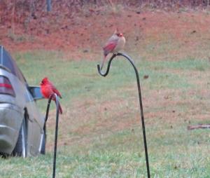 cardinals-dec18