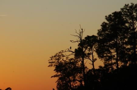 SunsetStork