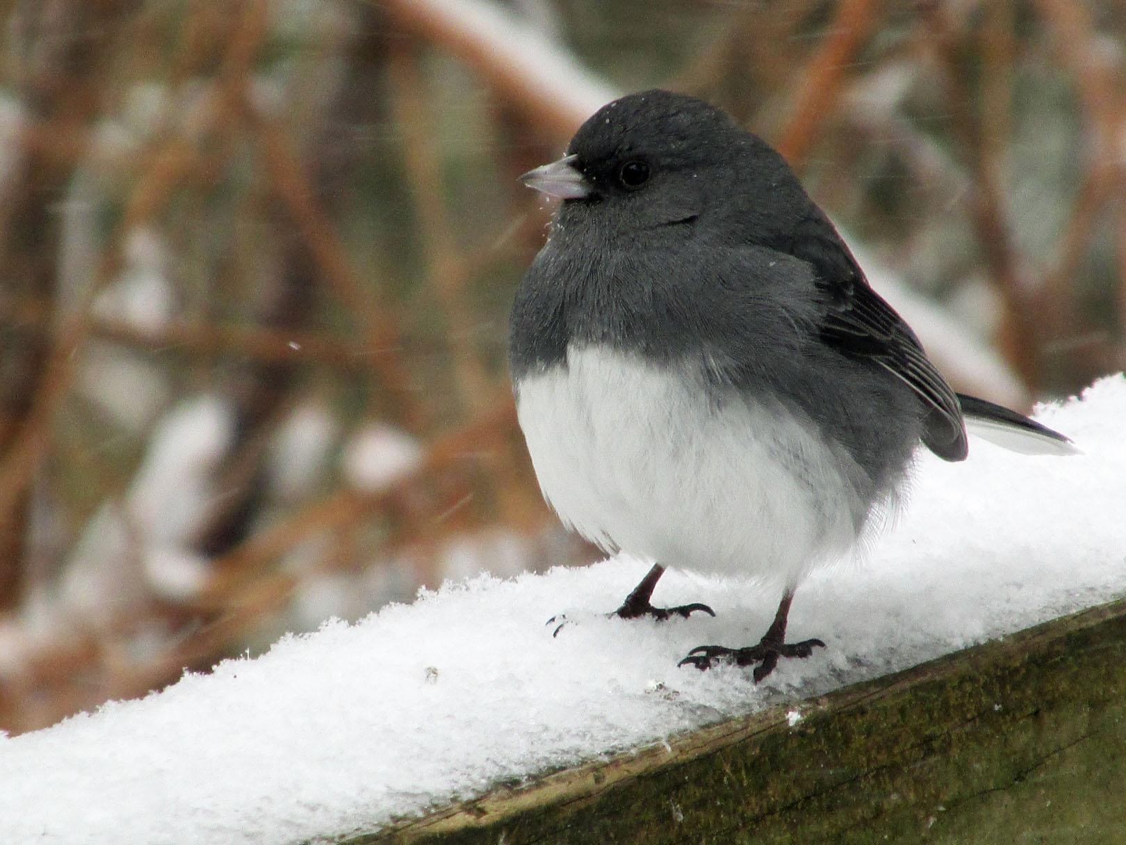 SNowbird-Feb18