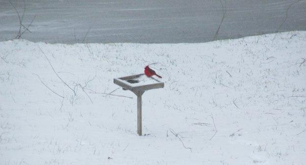 Winter-Cardinal