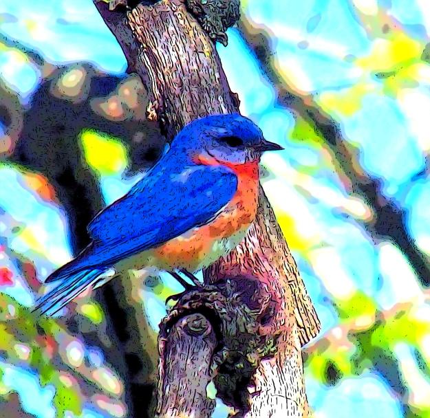Bluebird-Comic