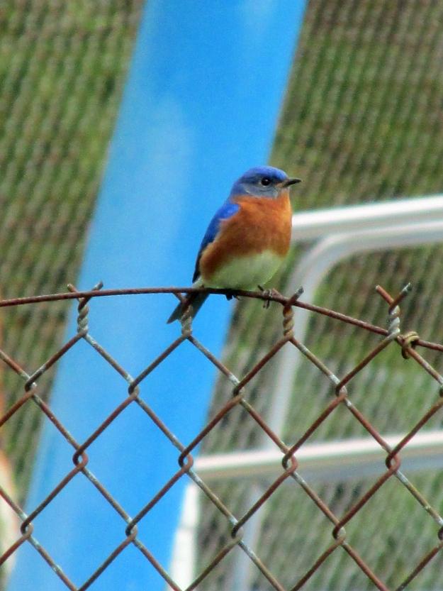 Bluebird-Pool