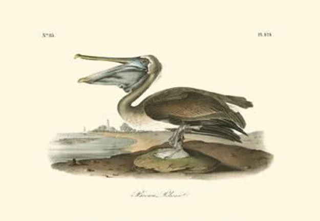 john-james-audubon-brown-pelican_a-l-6043043-0