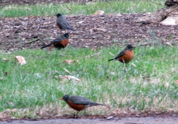 Robins-ETSU-Feb