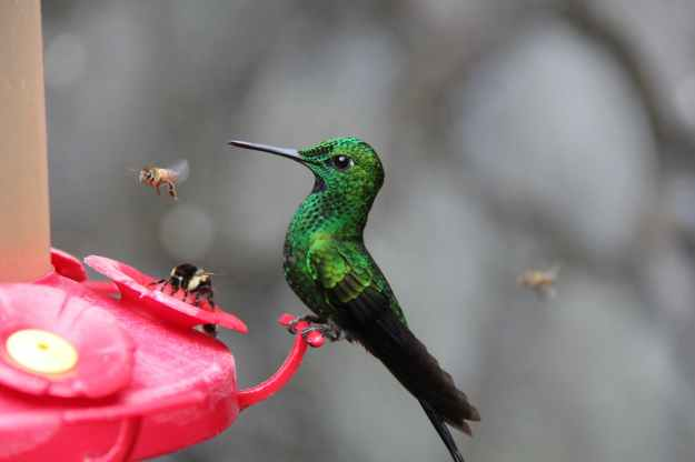 photo of green and black hummingbird perched on red branch
