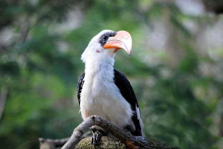 bird zoo beak tropical