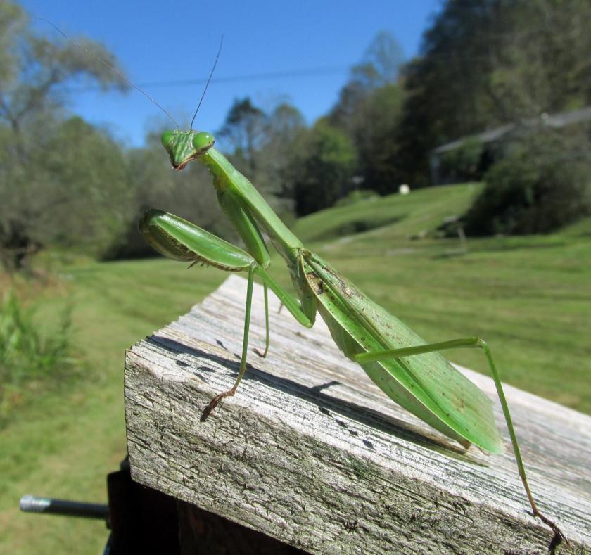 Mantis-Four