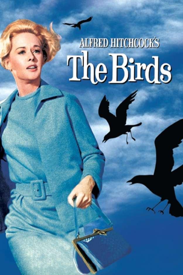 TheBIRDS!