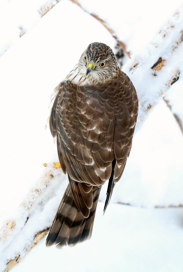 bird-2154147_1920