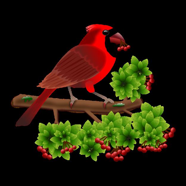 cardinal-1998407_1920