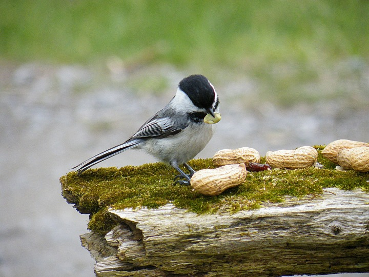 bird-Struza