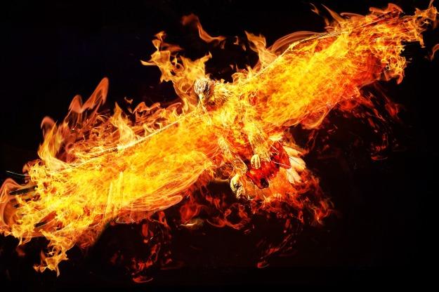 phoenix-2877486_1920